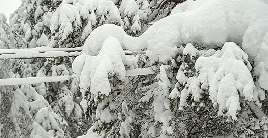 Lumiset puut painuvat sähkölankojen päälle.
