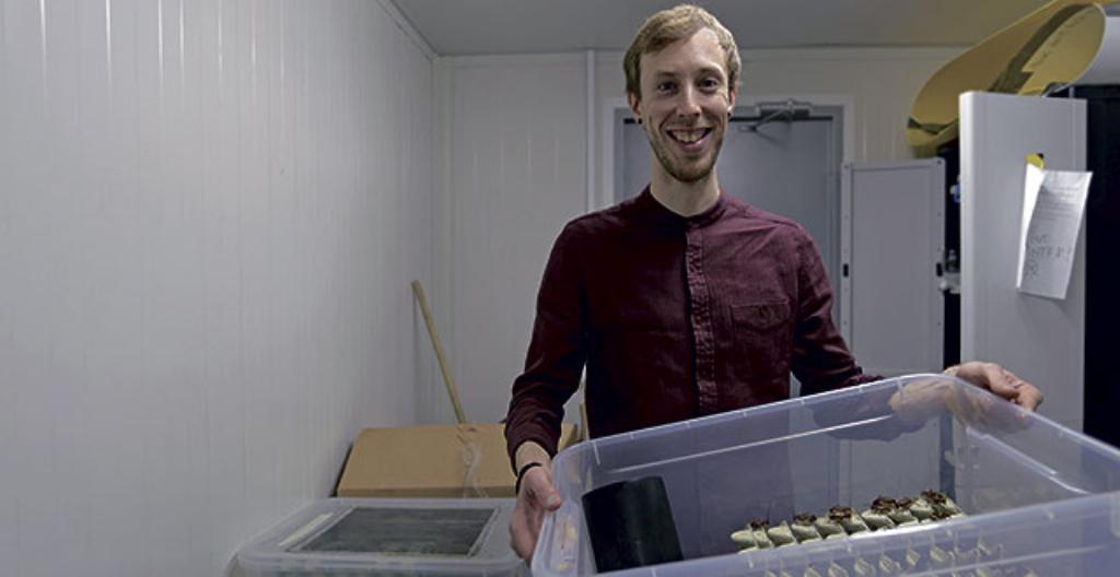 Jonas Aaltiolla on laatikossa jamaikankenttäsirkkoja.