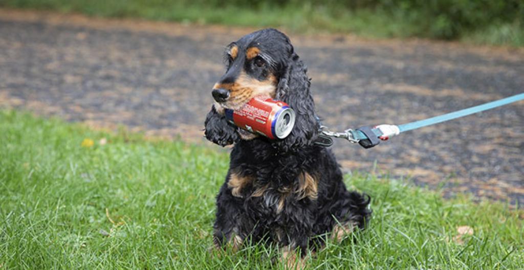 Roope-koira on löytänyt tyhjän tölkin.