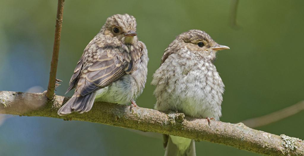 Kesällä on paljon linnunpoikasia. Niiden elämää on hauska seurata.